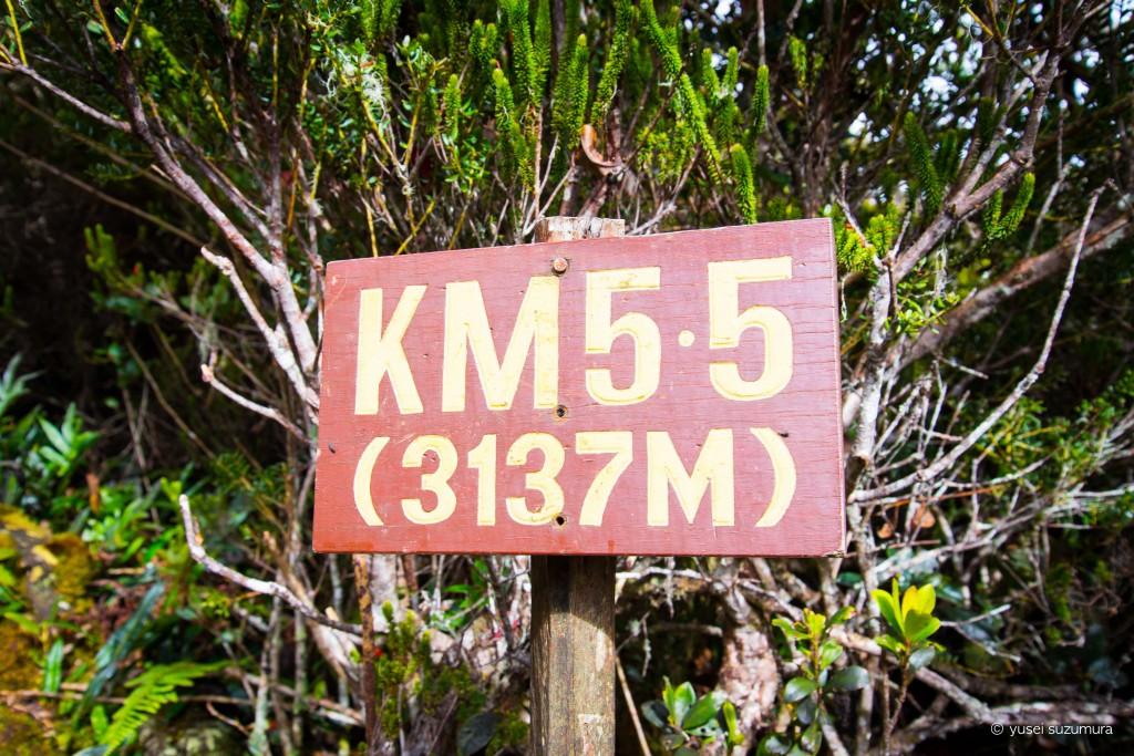 キナバル山登山道