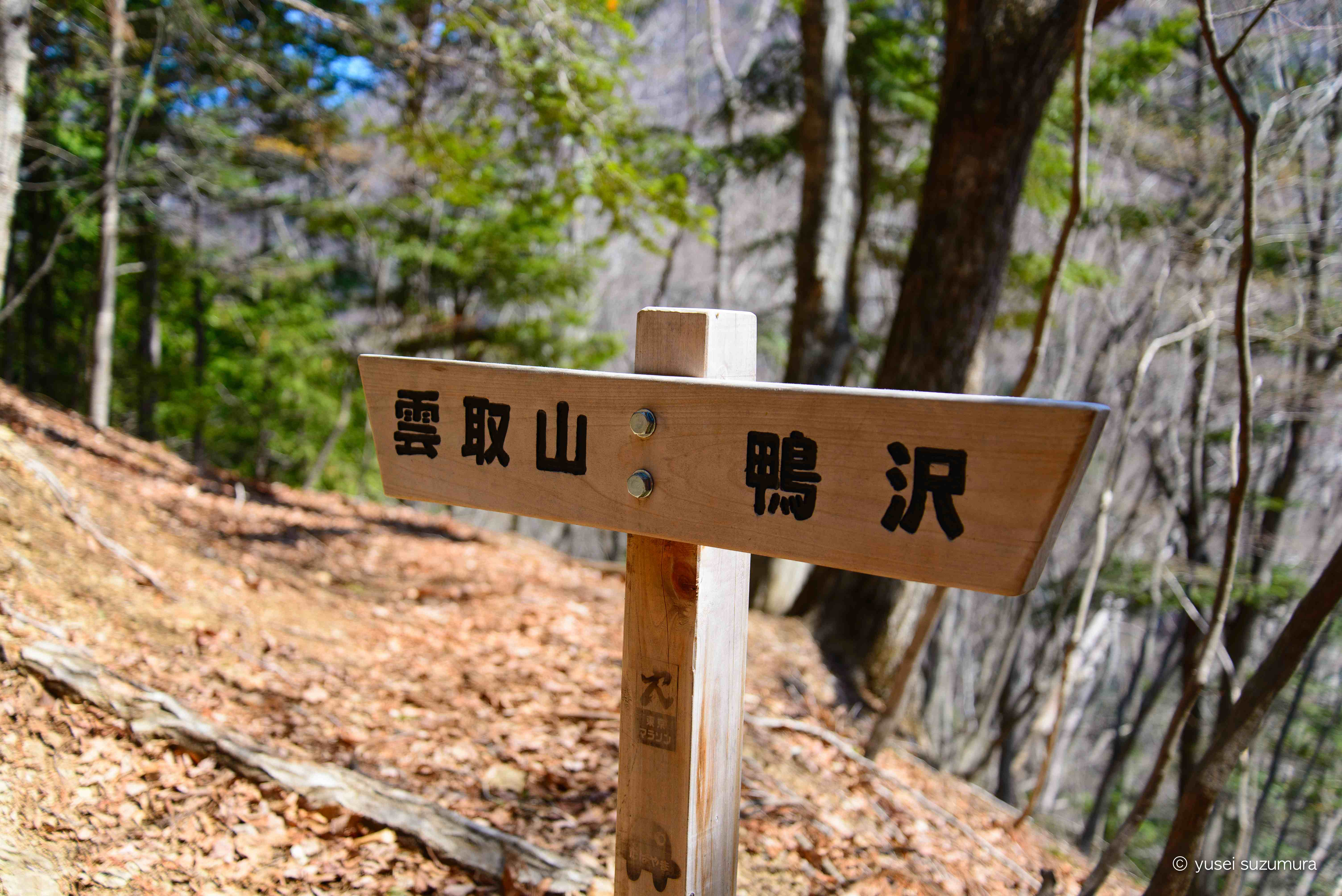 日本百名山、東京で一番高い雲取山に登ってきた!?
