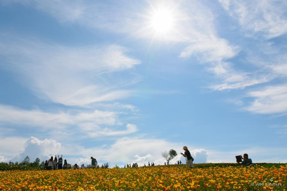 四季彩の丘 太陽