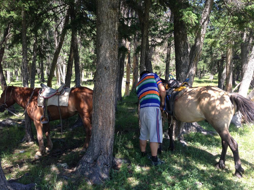 乗馬体験 モンゴル