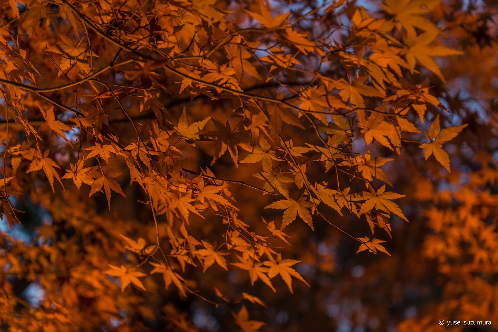 香嵐渓の紅葉が燃えるように綺麗