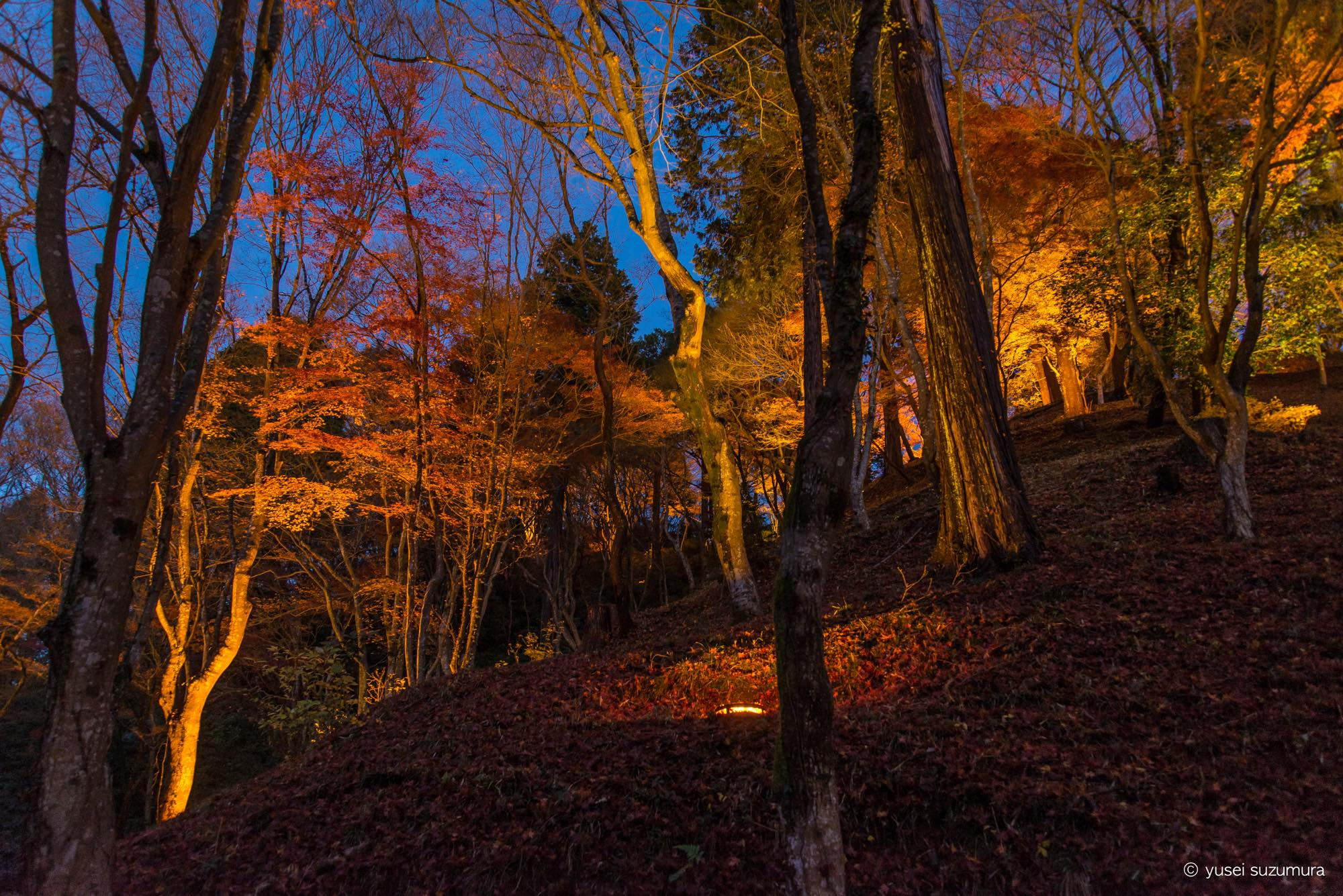 まだ明るい香嵐渓の紅葉