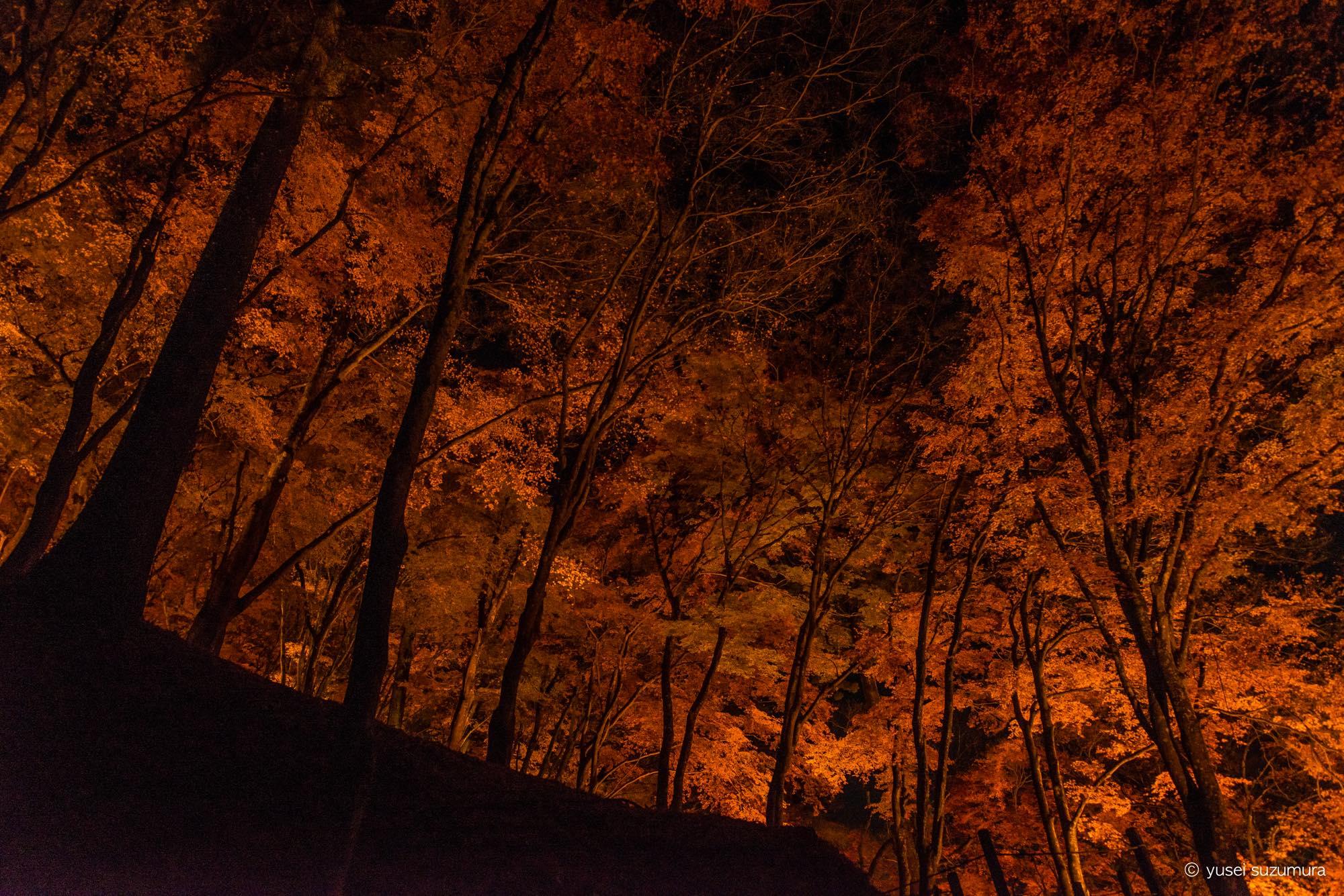 赤く染まる森