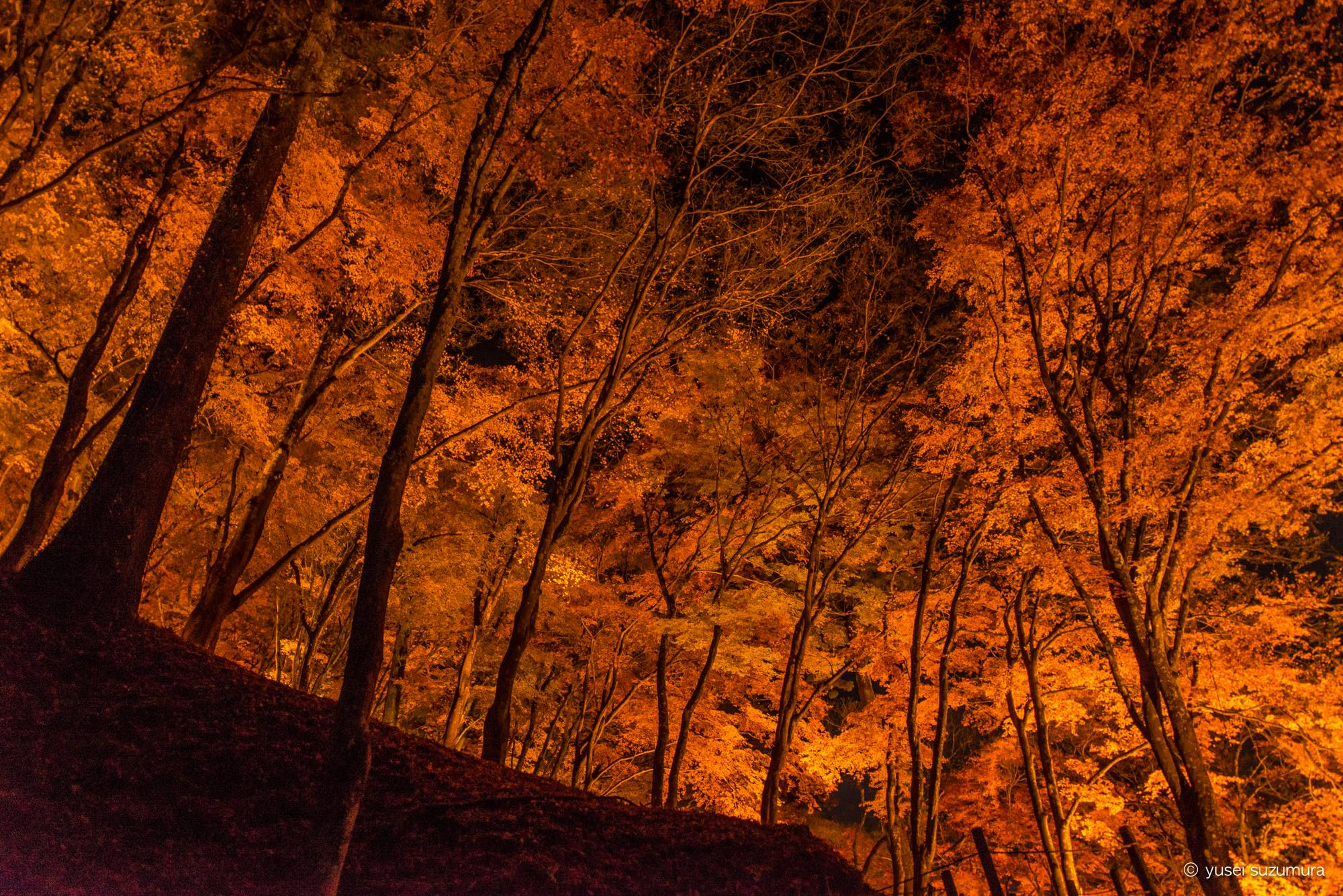 香嵐渓の紅葉ライトアップ