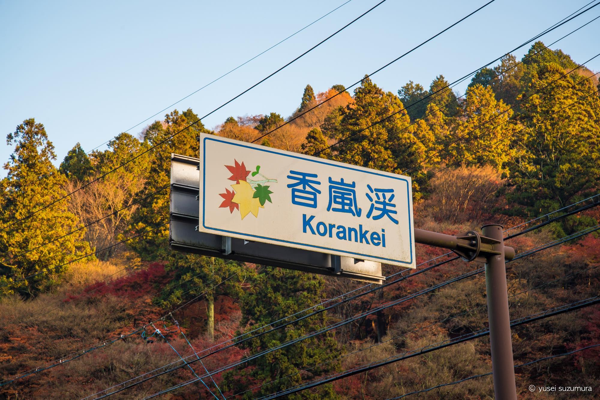 今が見頃!香嵐渓のもみじまつりは落葉で絨毯ができていました。