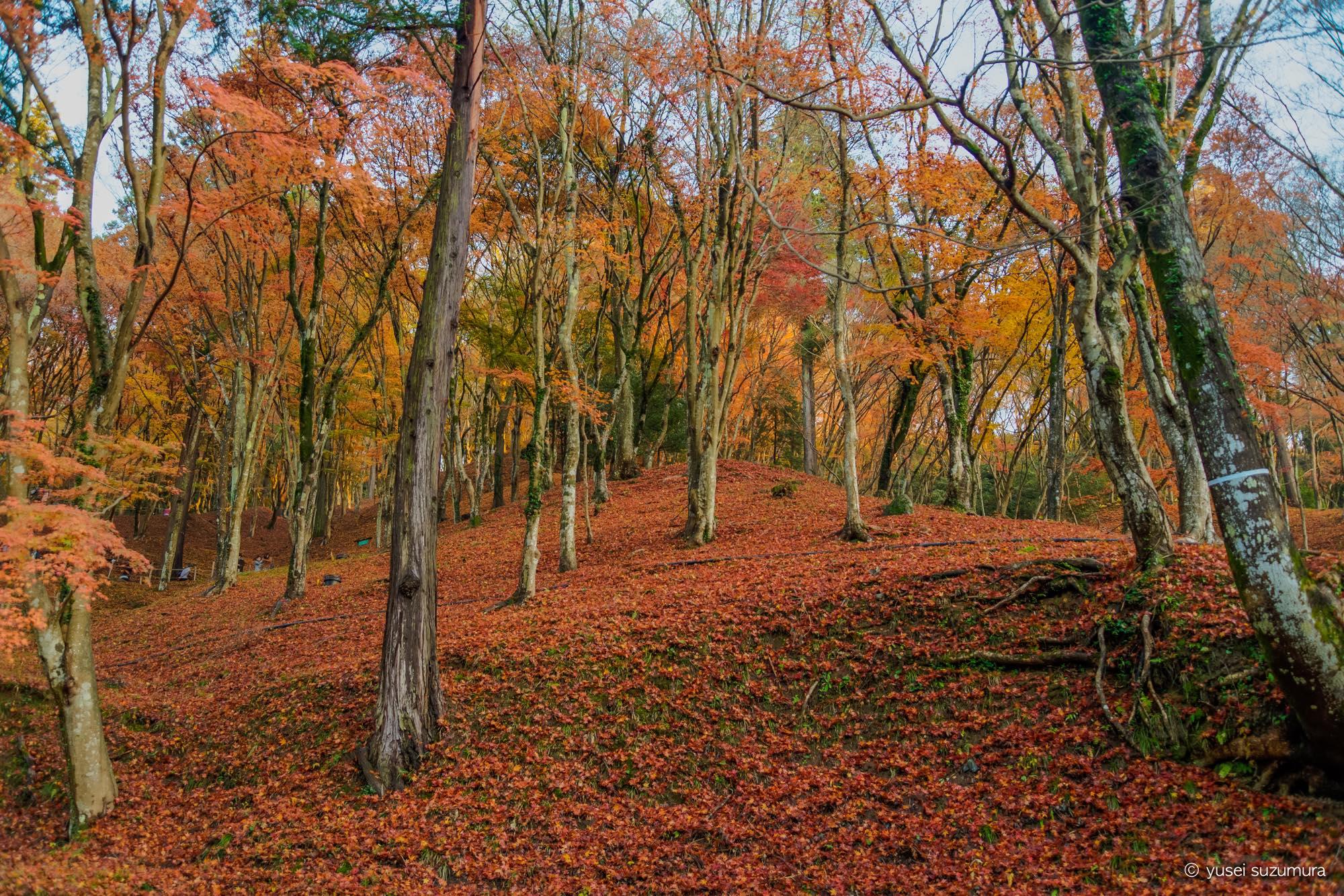 香嵐渓の紅葉の絨毯