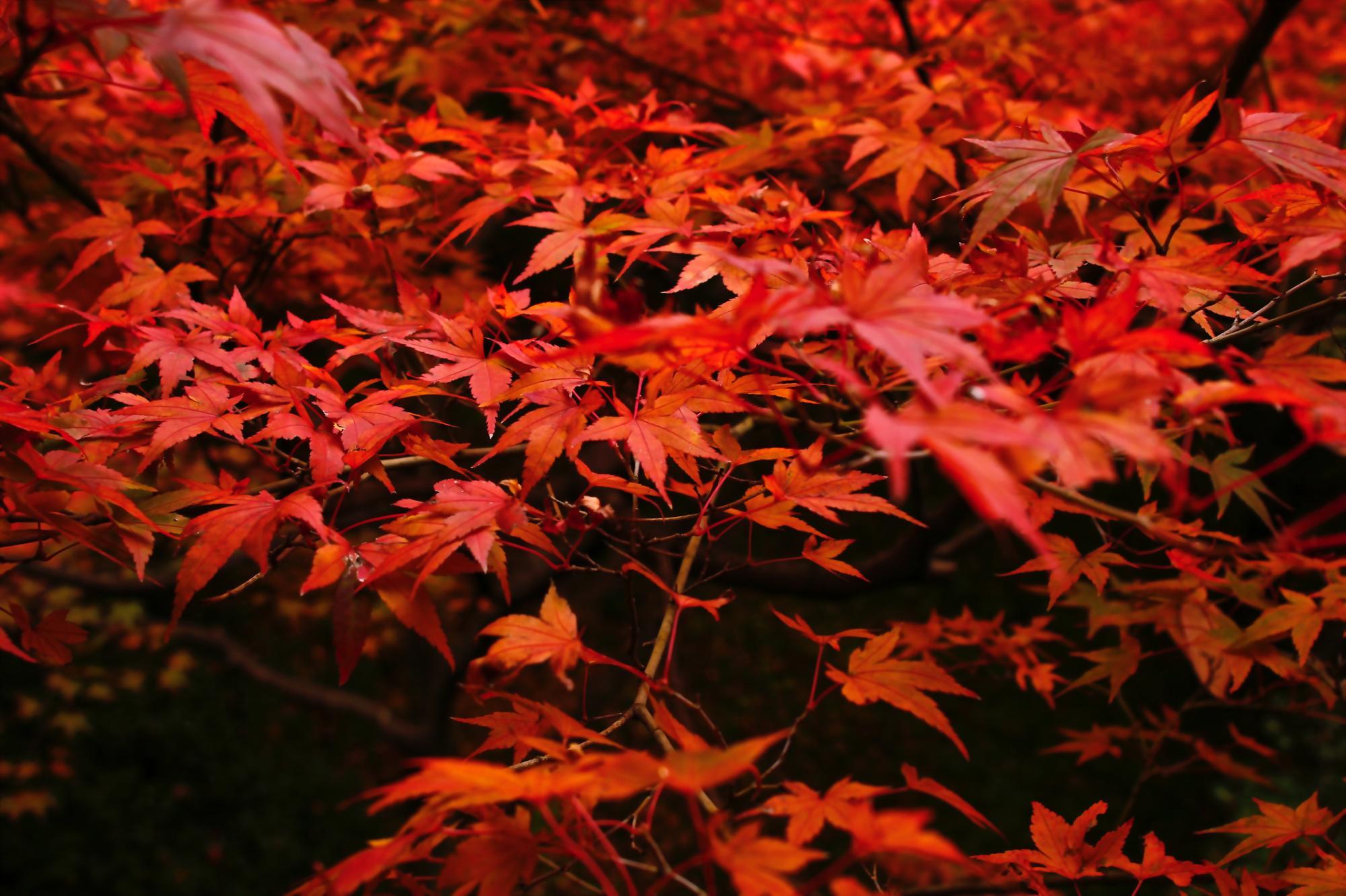 京都に4年間住んでいた僕がおすすめする京都のイチオシ紅葉スポット10選!