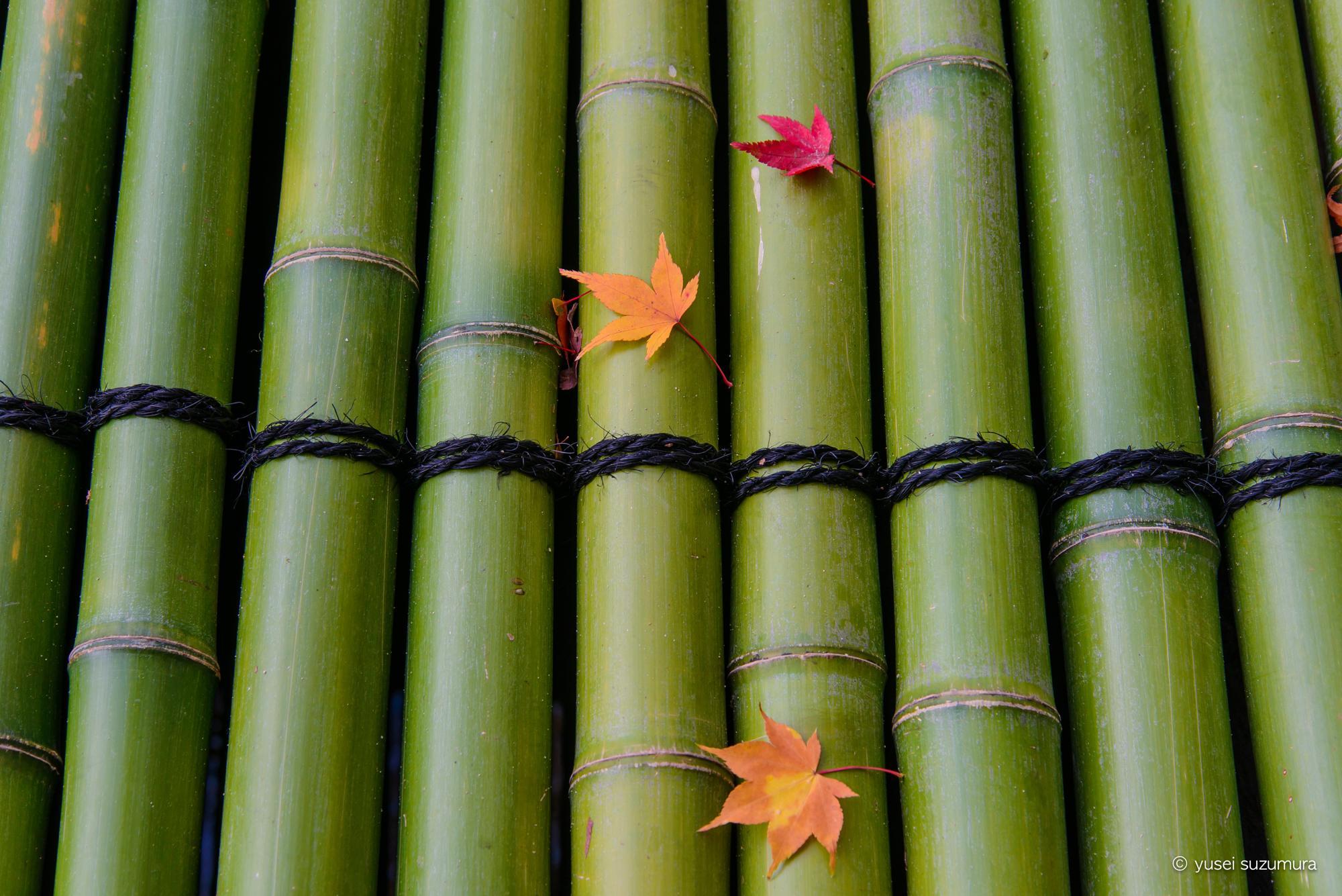 竹の上の紅葉