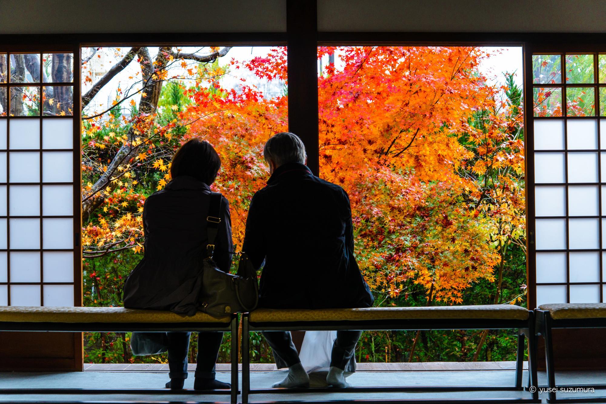 そうだ、京都行こうの源光庵に行ってきた。12月から写真撮影解禁!
