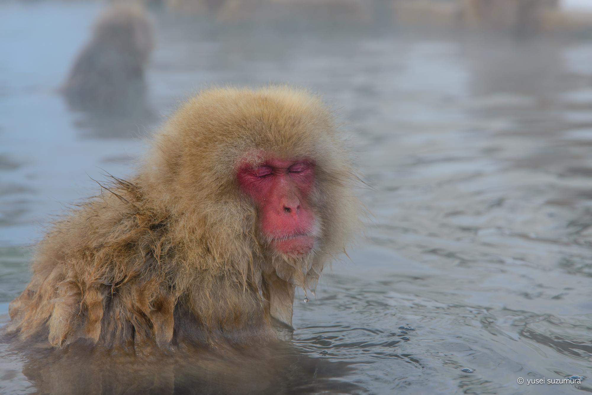 地獄谷温泉でスノーモンキーに会ってきた!