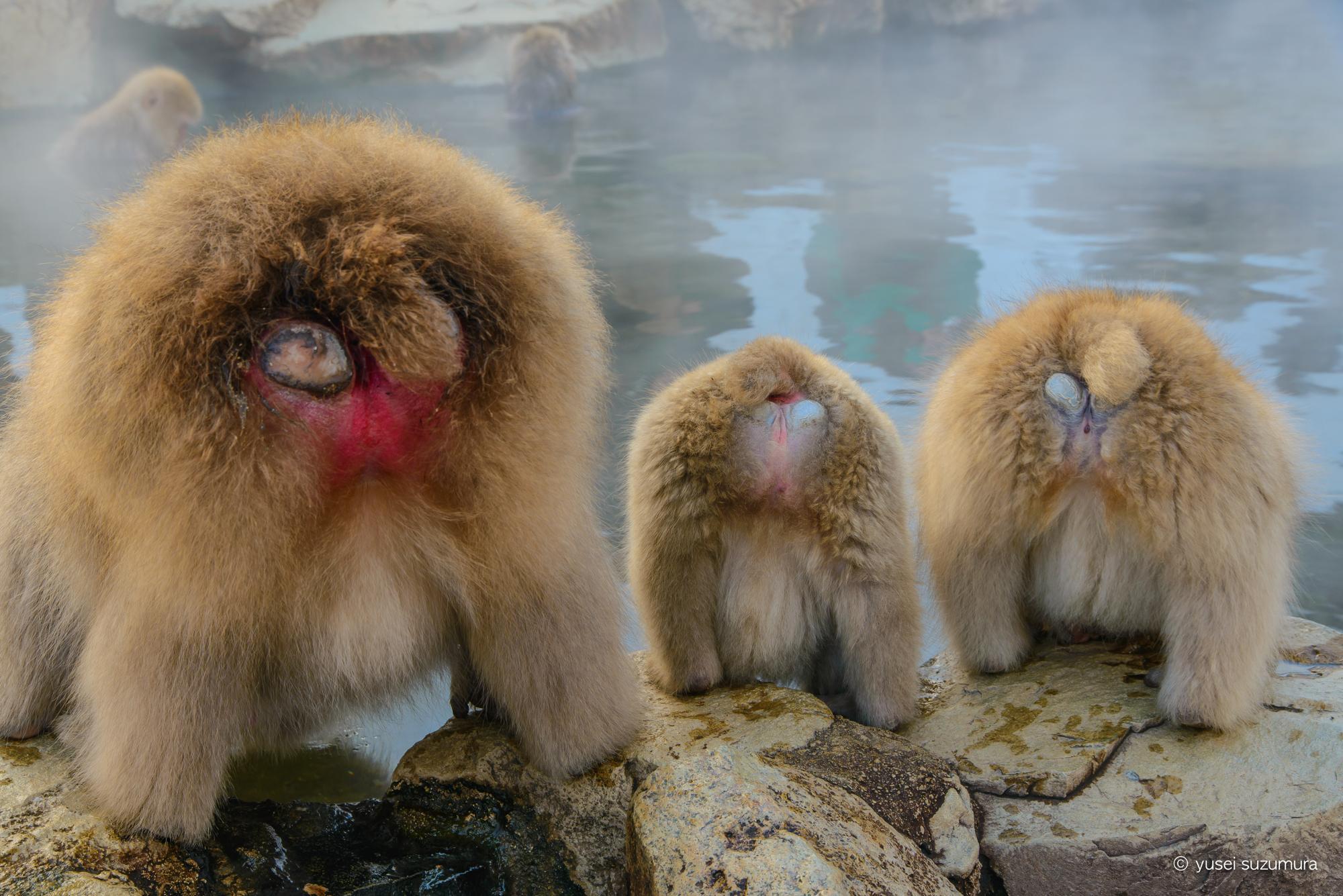 地獄谷温泉のお猿さんのお尻