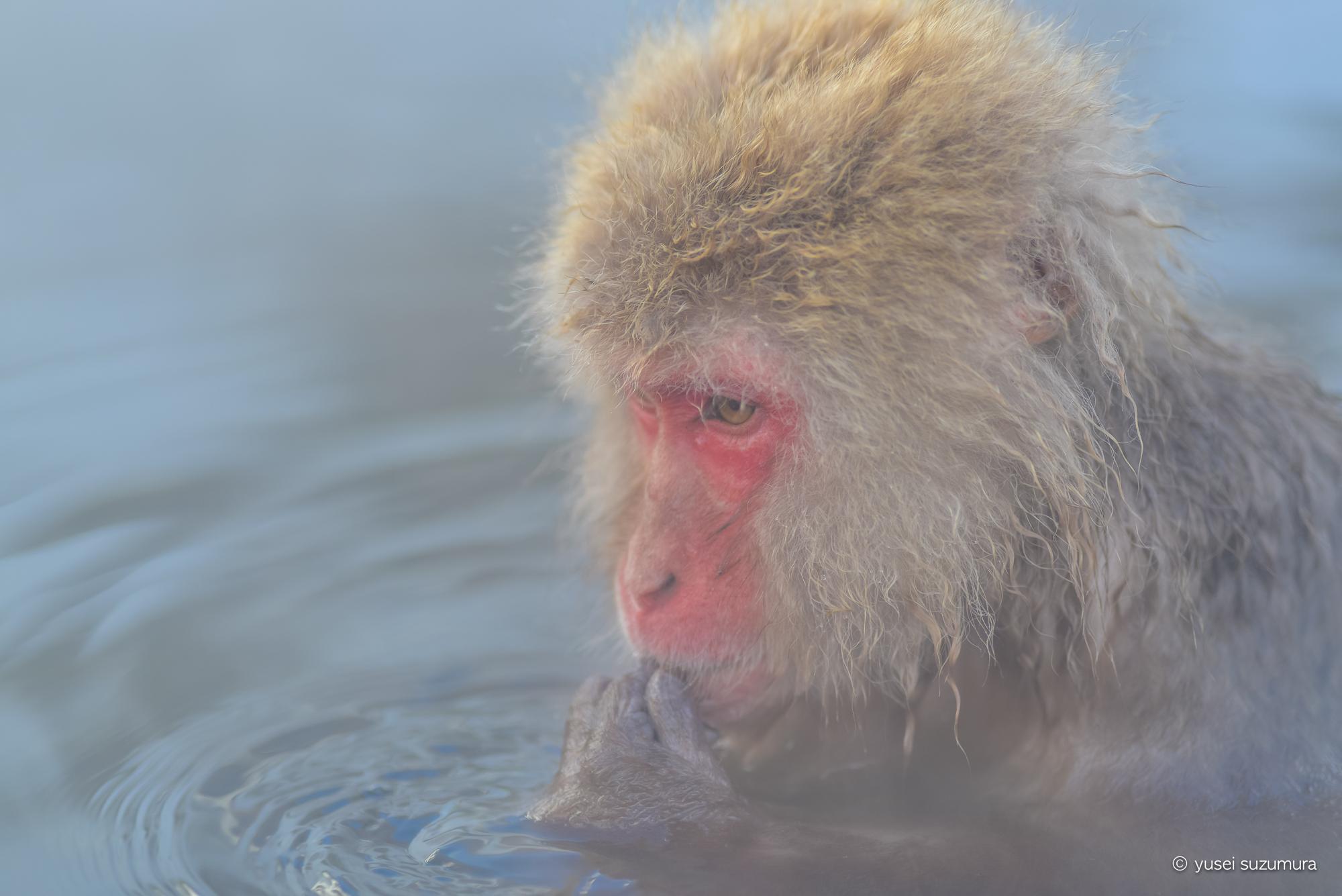 地獄谷野猿公苑 猿 アップ