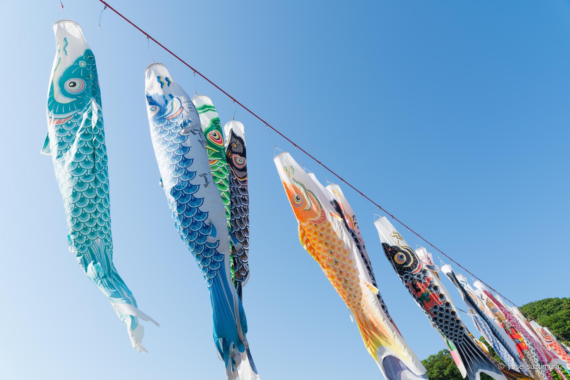 GWのレジャーに最適!相模川の鯉のぼりが予想以上に良かった!