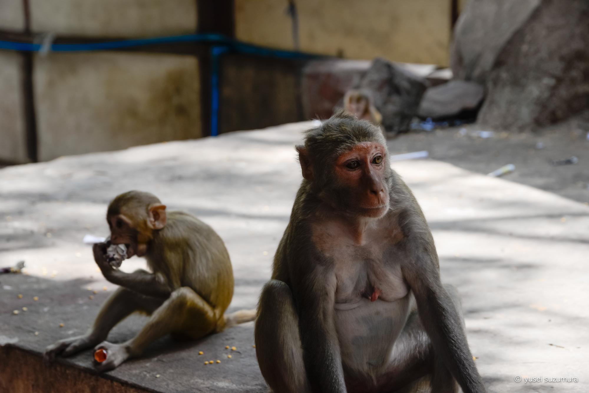 ポッパ山 お猿さん