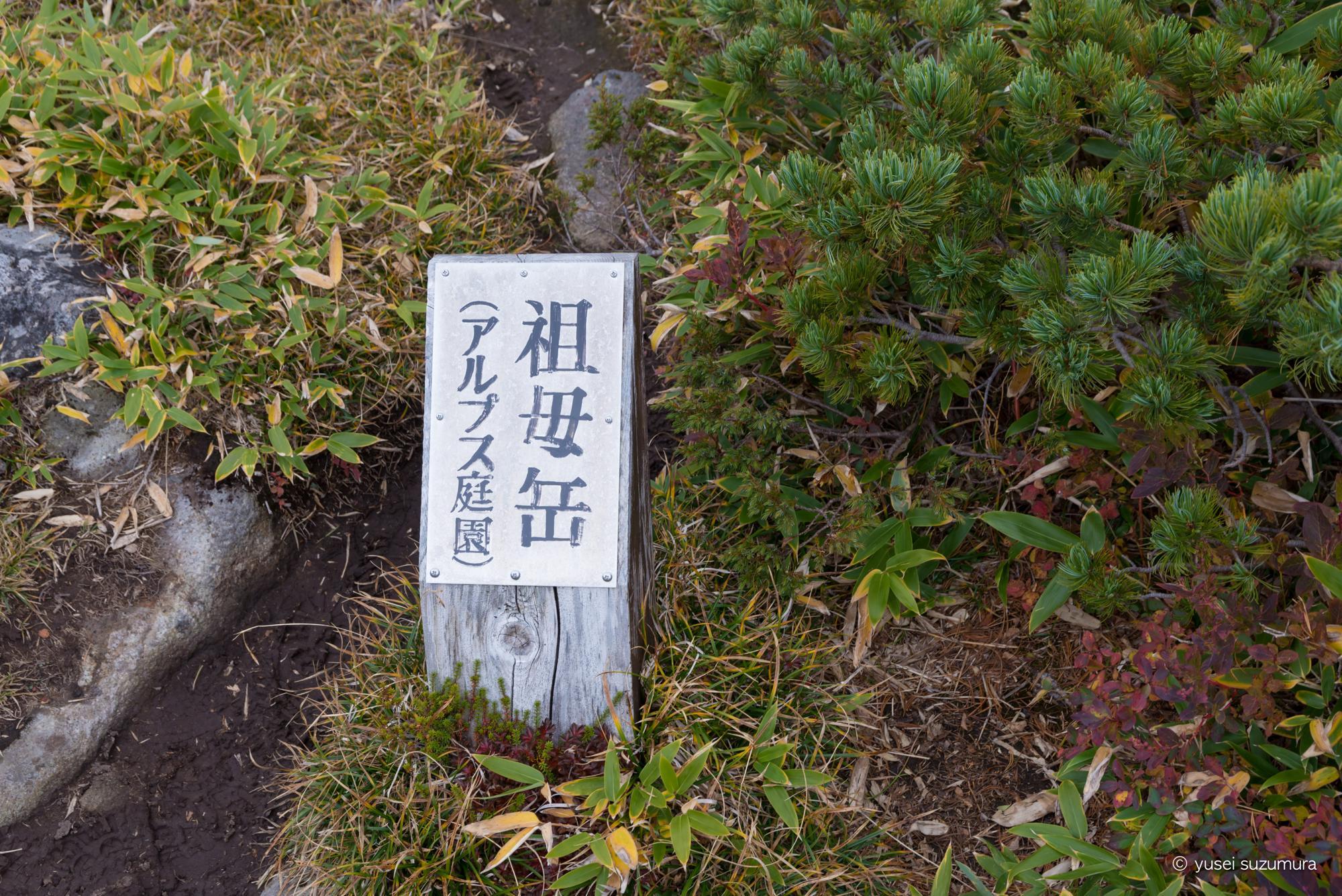 アルプス庭園 祖母岳