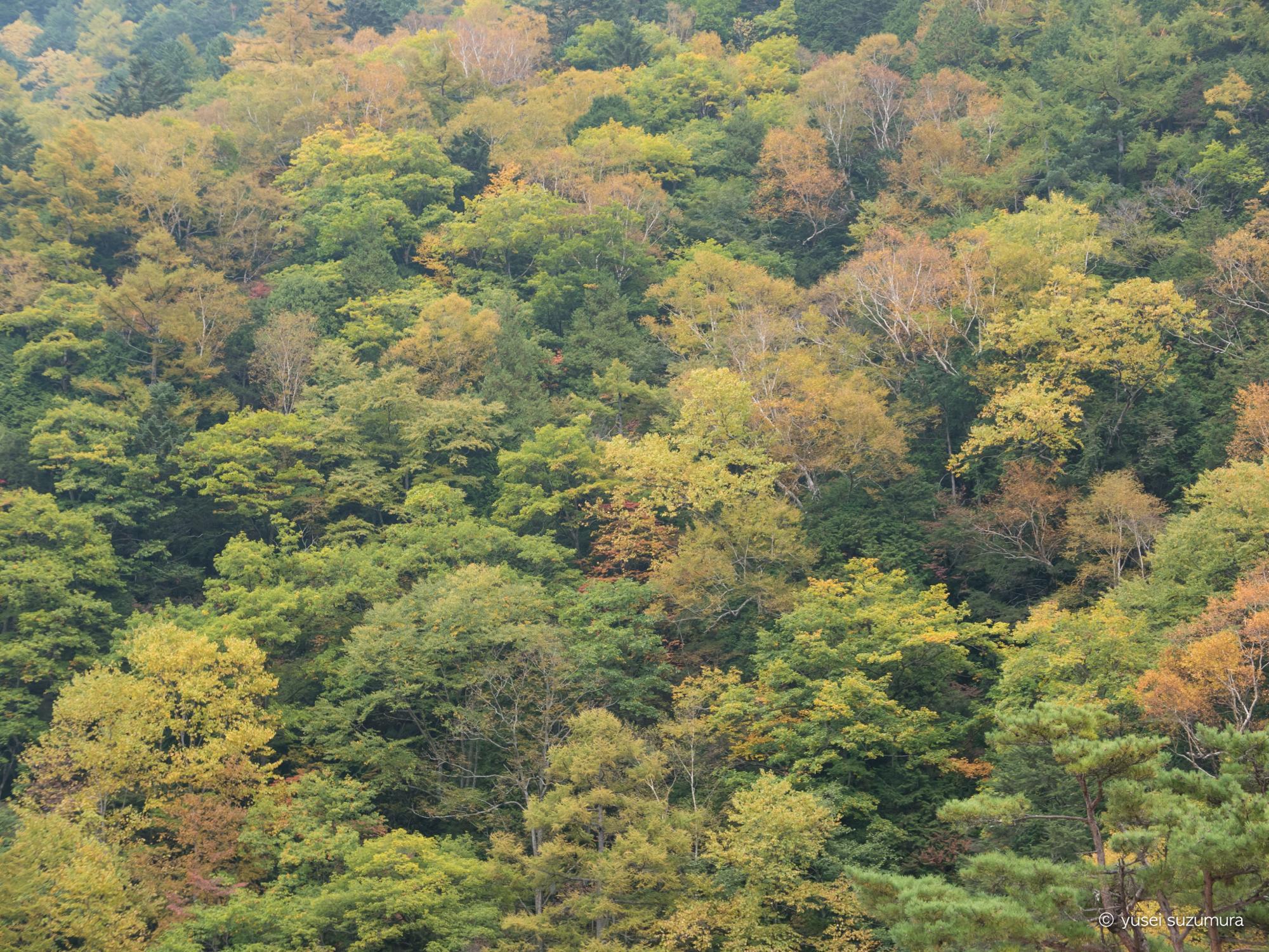 紅葉 燕岳 登山