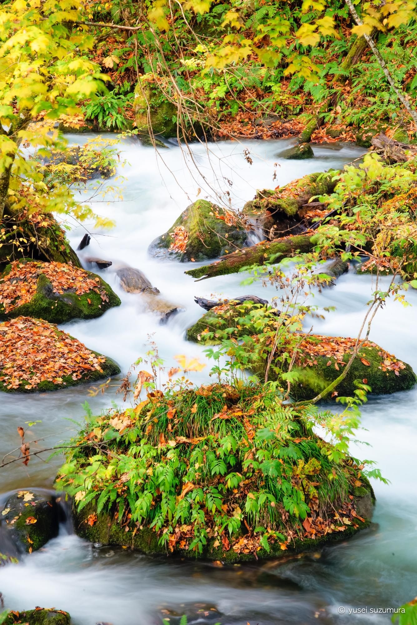 奥入瀬 紅葉 川の流れ