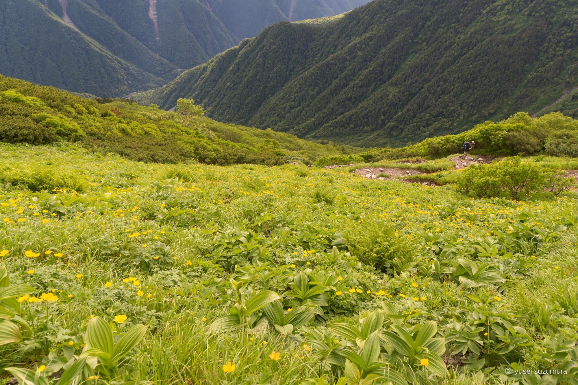 北岳 お花畑