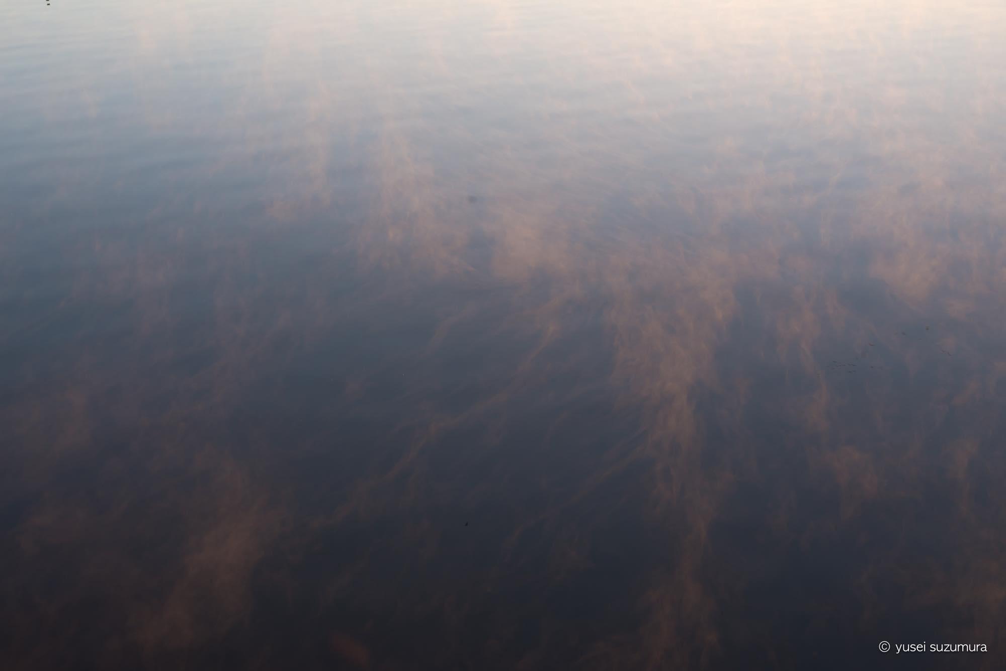 朝霧 印旛沼