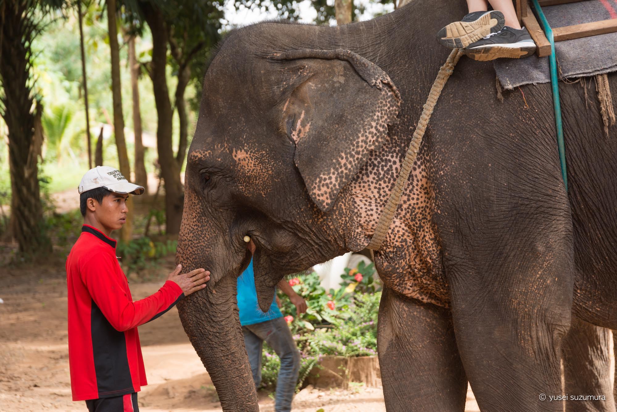 象使いに俺はなる!象使いのライセンスを取得してきた。