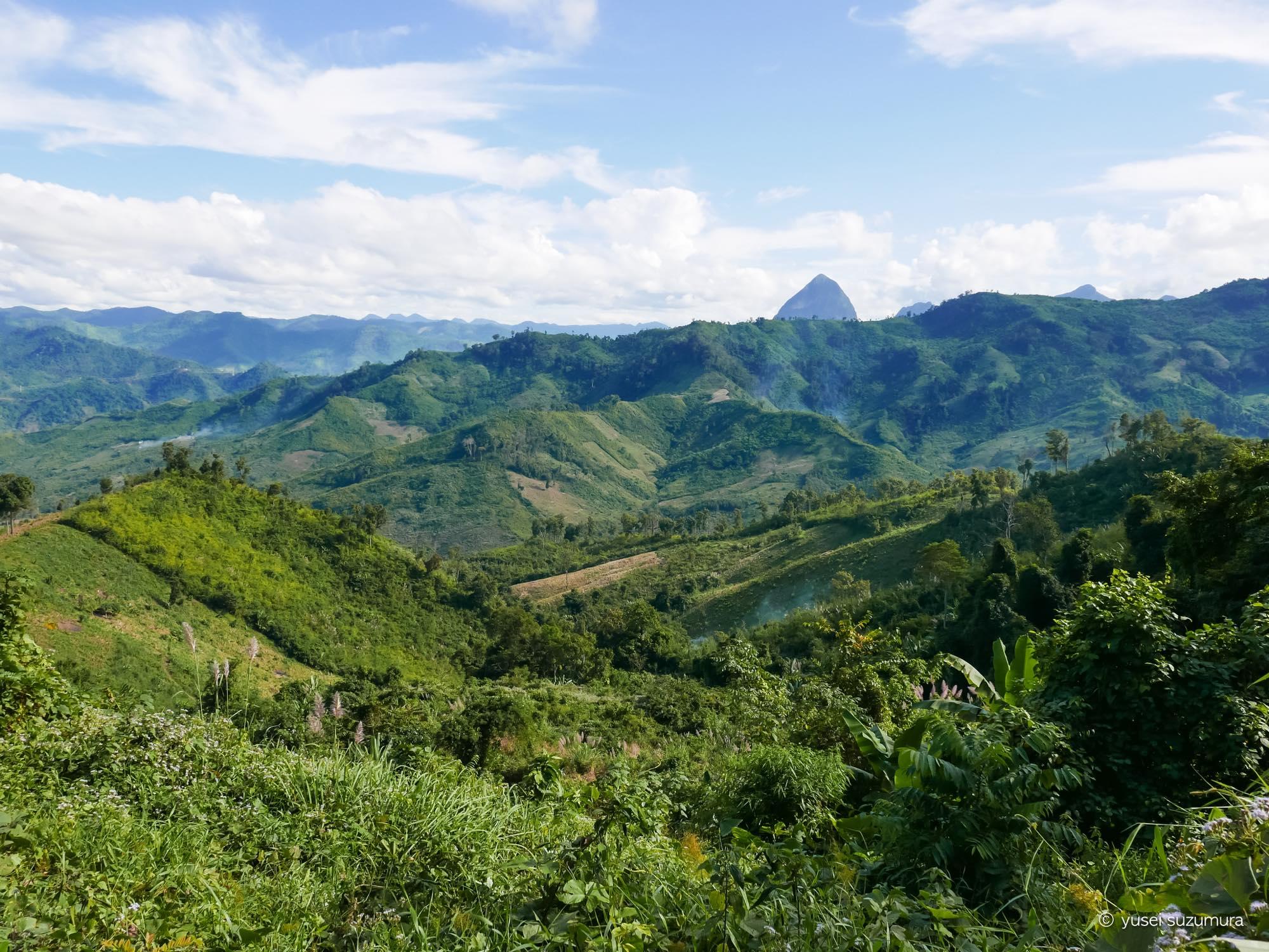 森 ジャングル ラオス