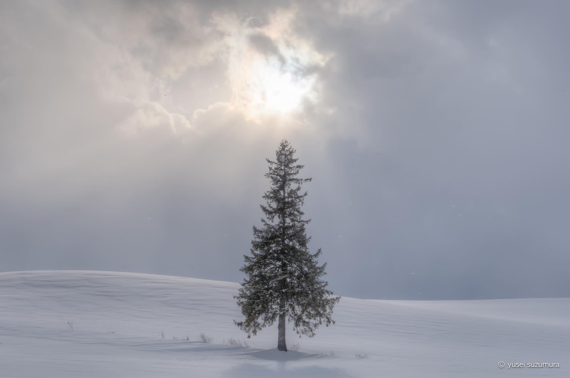美しすぎる冬の美瑛。降りしきる雪の中撮影してきた。