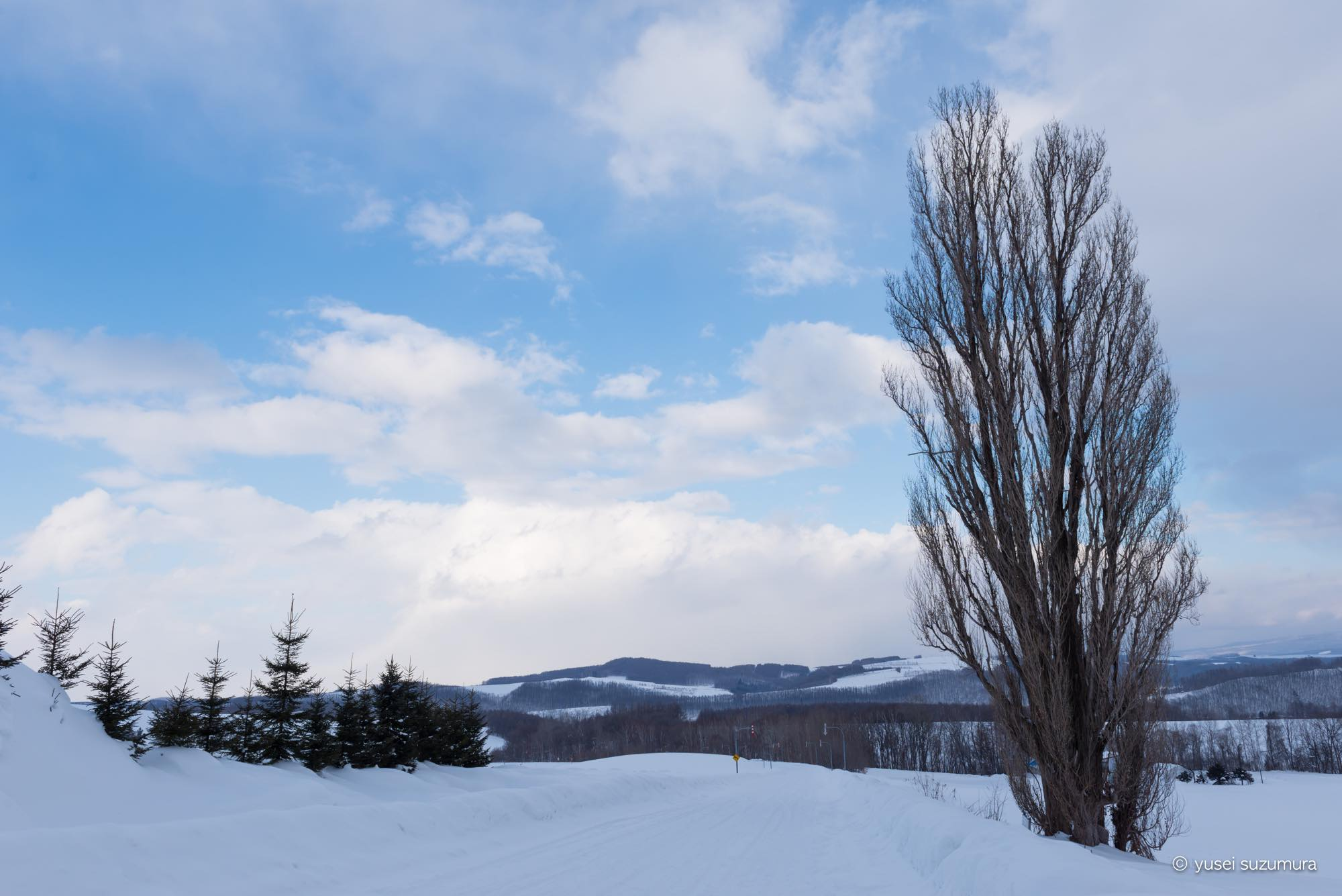 ケンとメリーの木 冬
