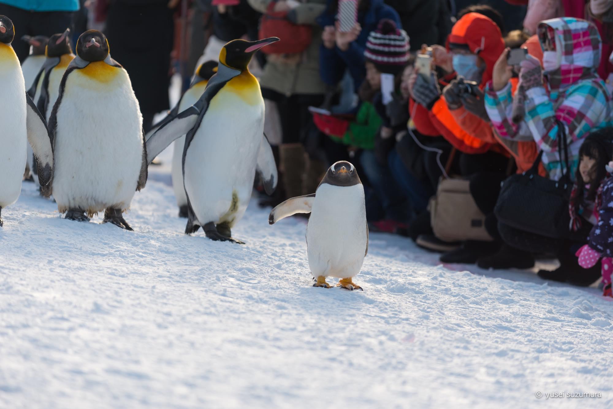 ペンギン 旭山動物園
