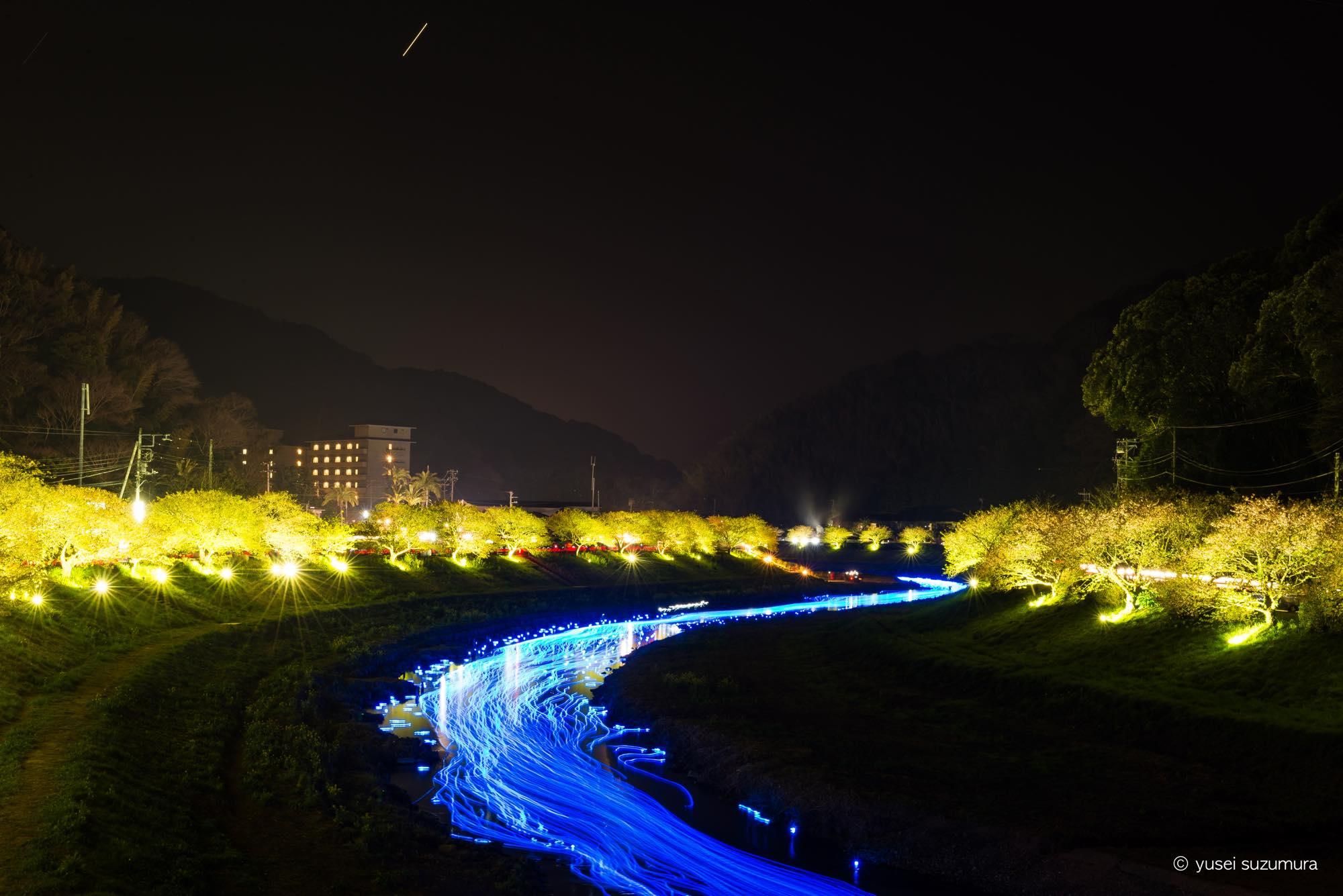 南伊豆・みなみの桜で夜桜☆流れ星を体験!