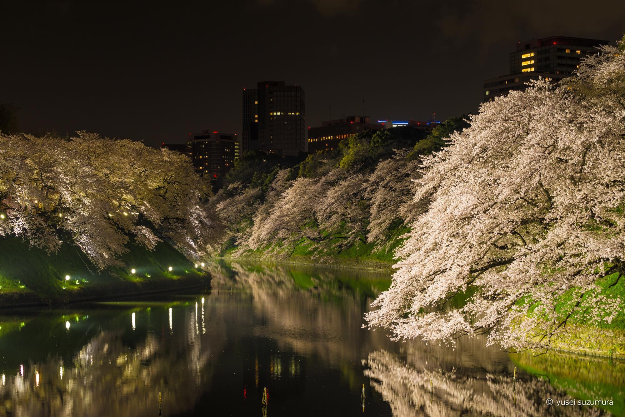 千鳥ヶ淵 桜 リフレクション