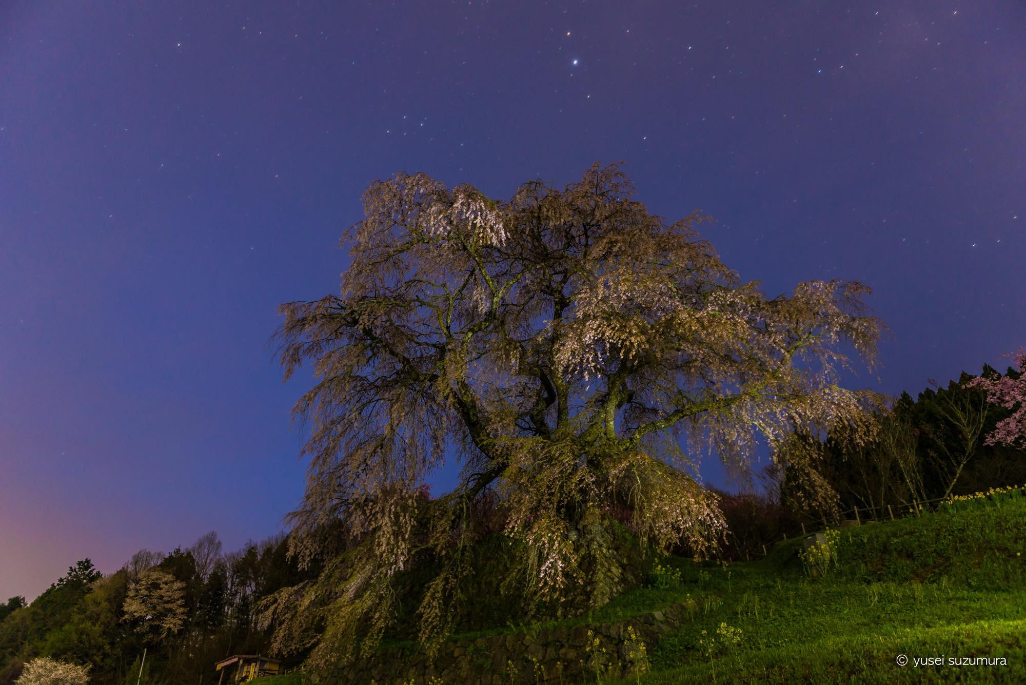 宇宙を感じた。天の川の下で又兵衛桜と諸木野の桜を撮ってきた。