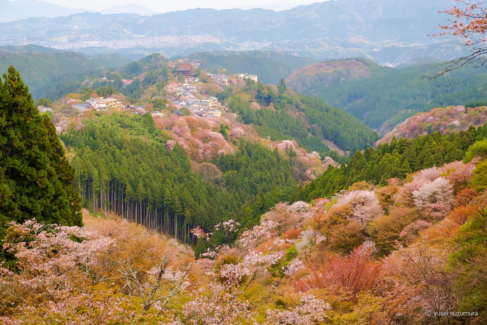 日本一の桜の名所。「一目千本」の吉野山で桜を撮影!!