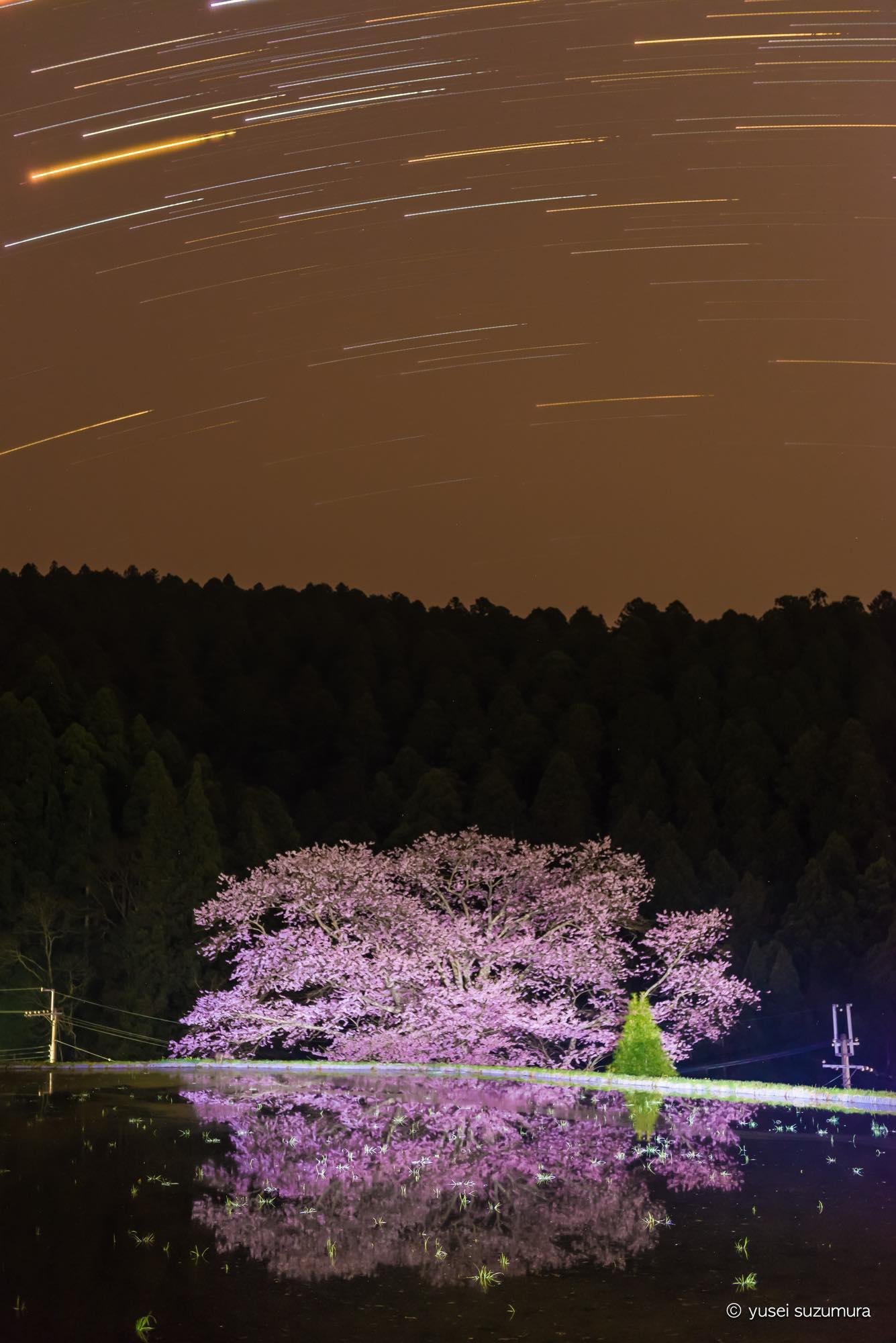 諸木野 比較明合成 桜