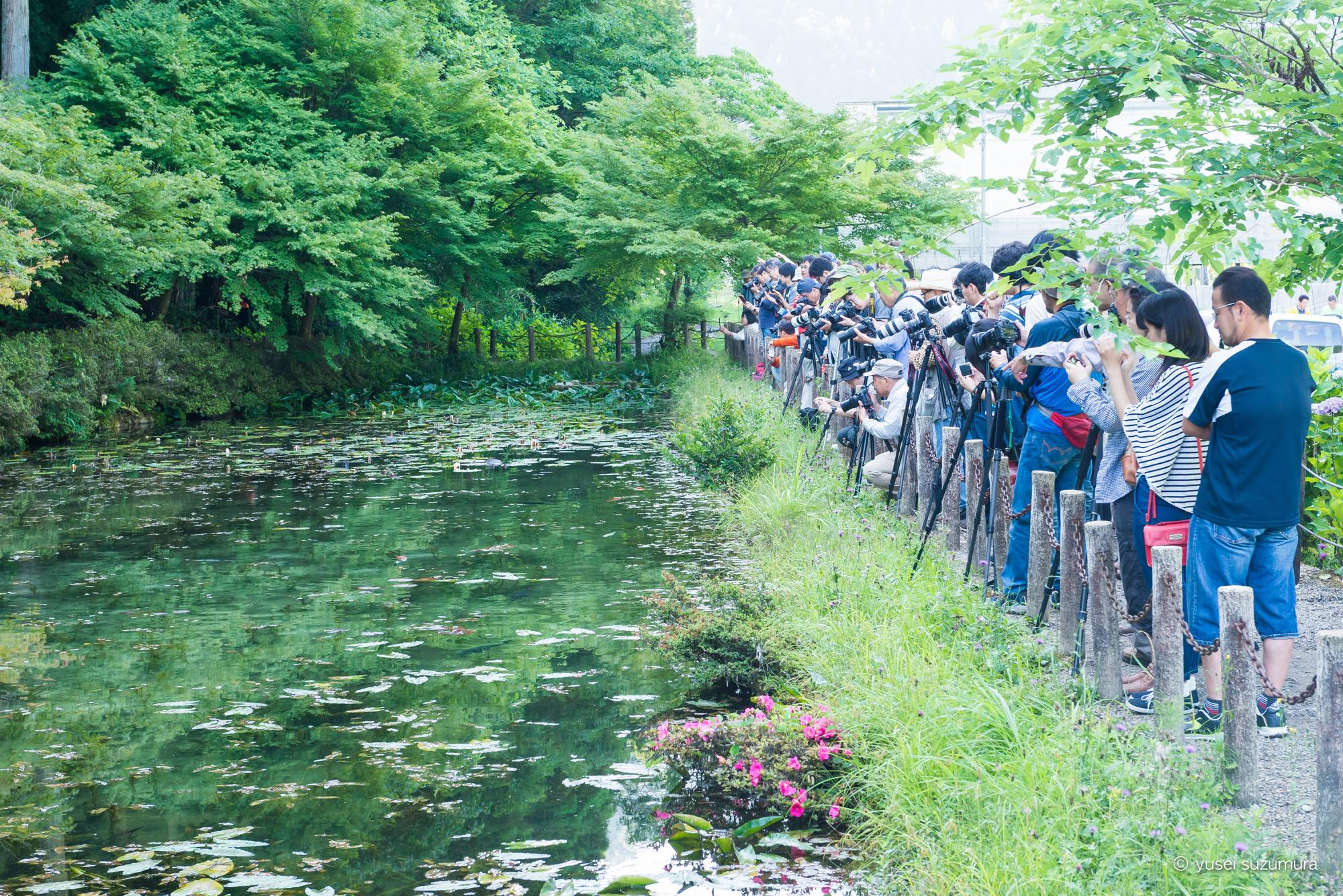 モネの池 見学者 カメラマン