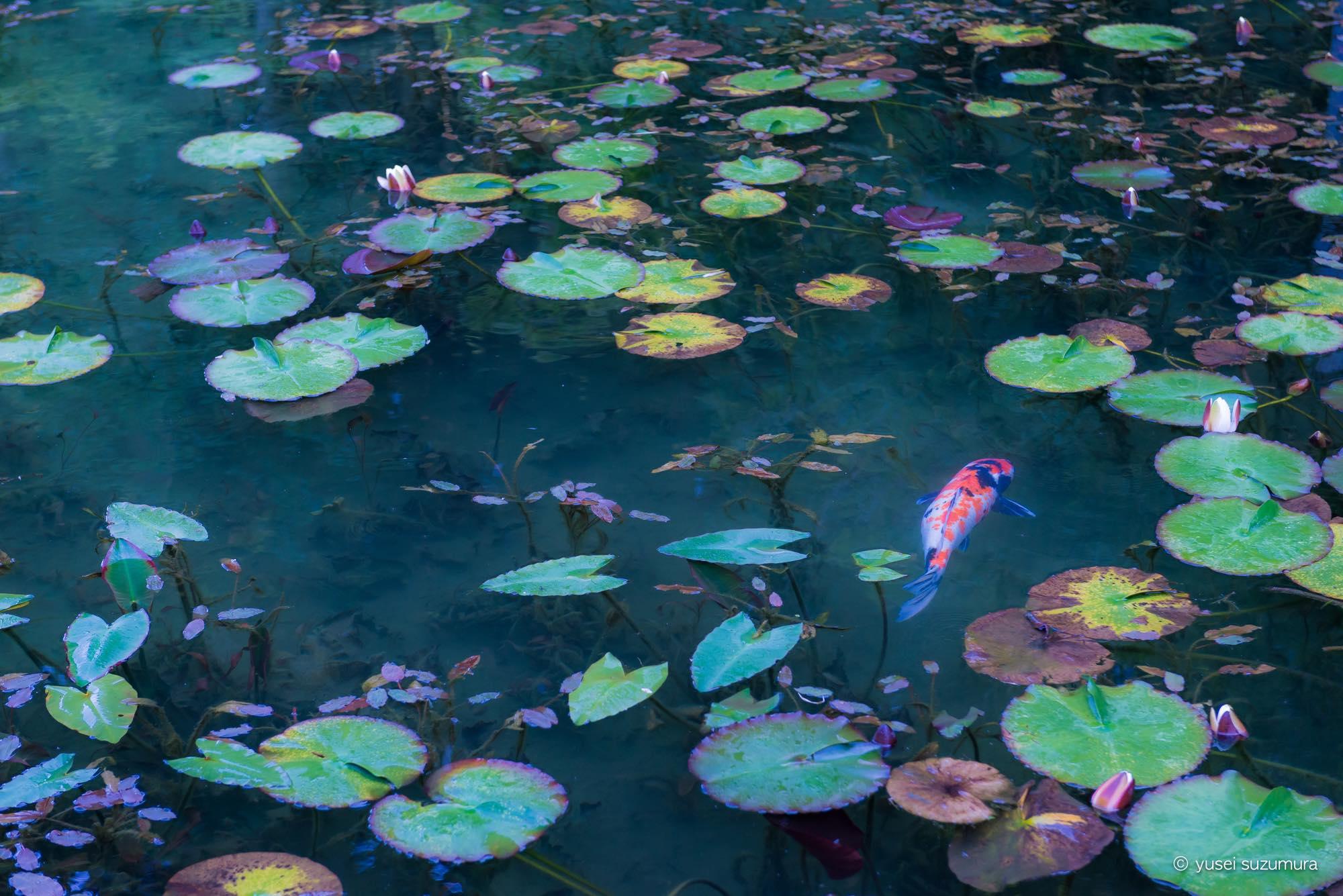 関市 モネの池