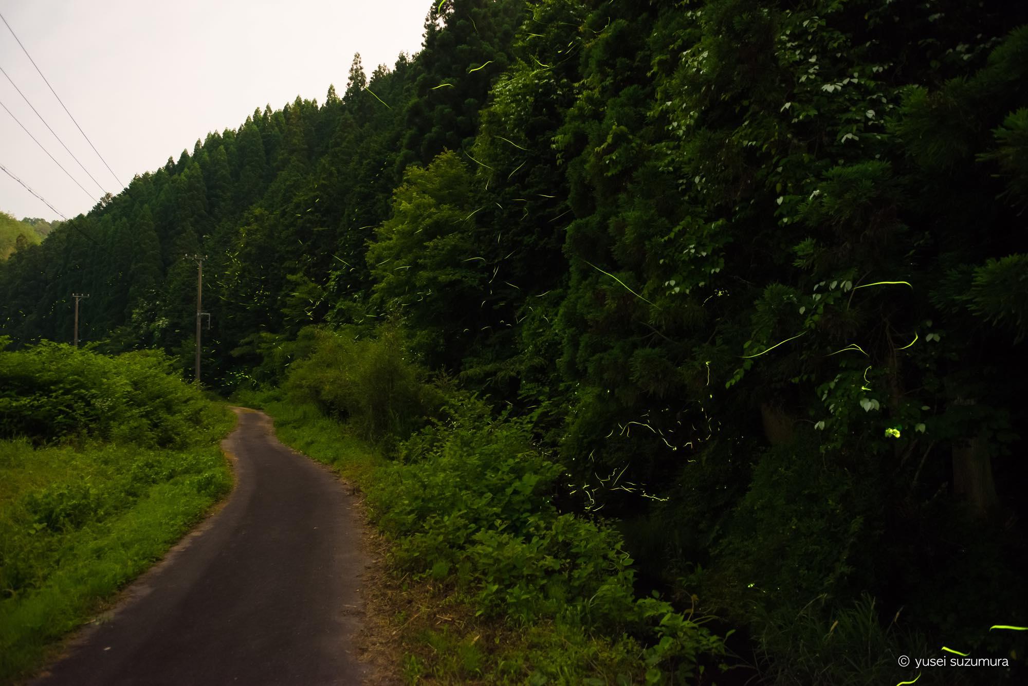 美濃加茂 川浦川 ホタル 2