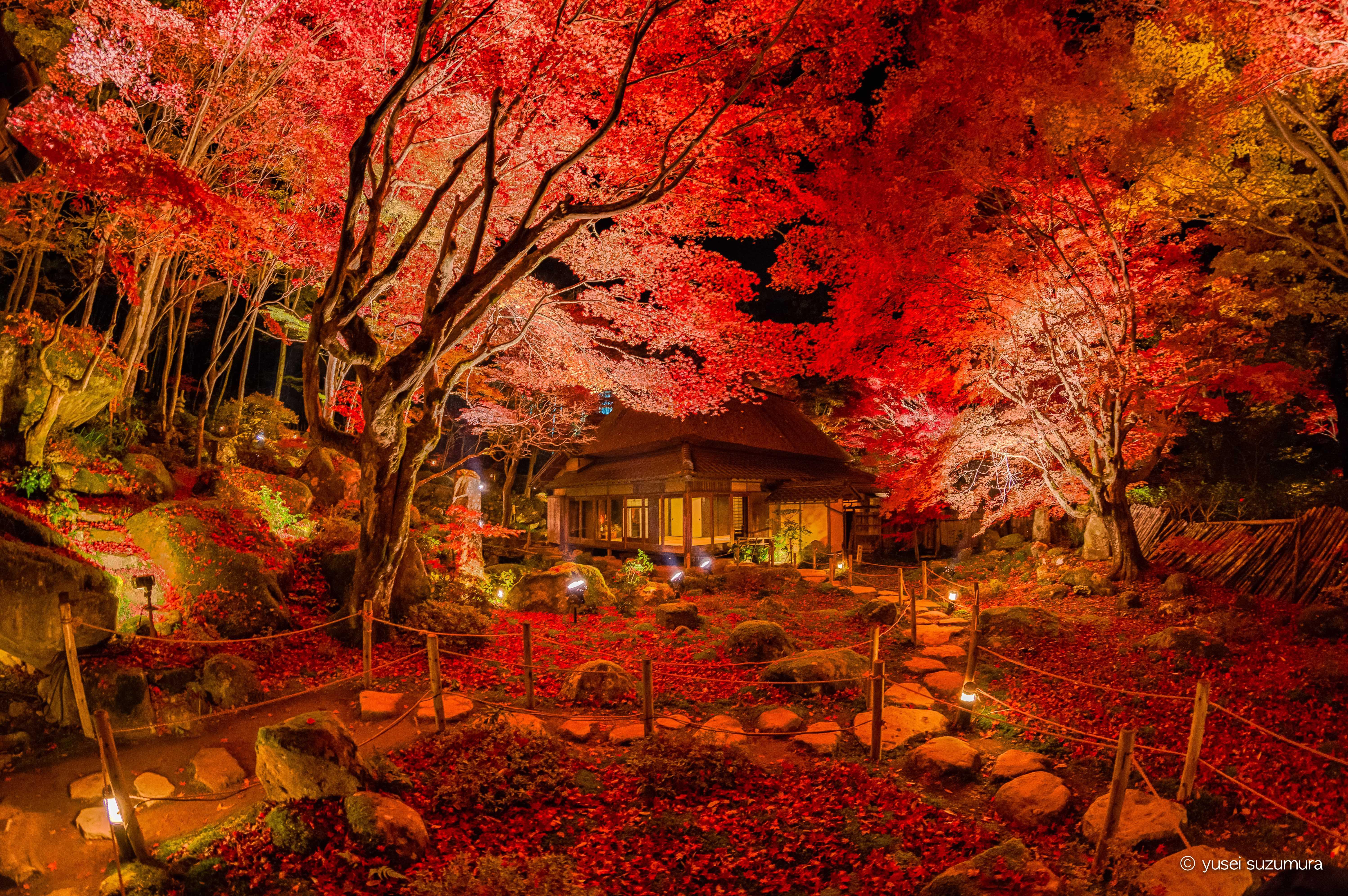紅葉のライトアップ。滋賀県の教林坊へ行ってきた。