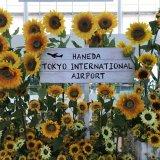 まさかのシップチェンジ!羽田空港で国際線に搭乗したら機材変更で大幅に出発がおくれた話